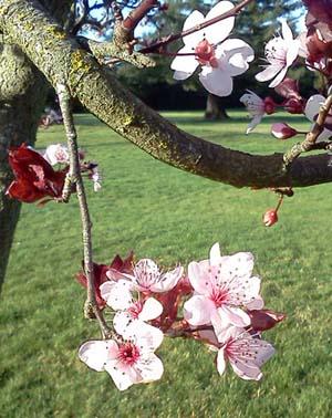 2015-02 spring bud break