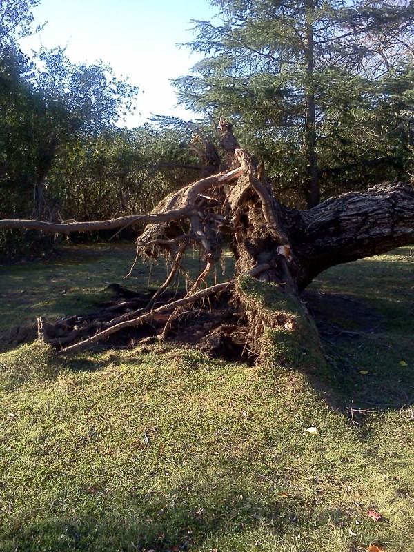 November 2013 – Greenspace Storm Damage